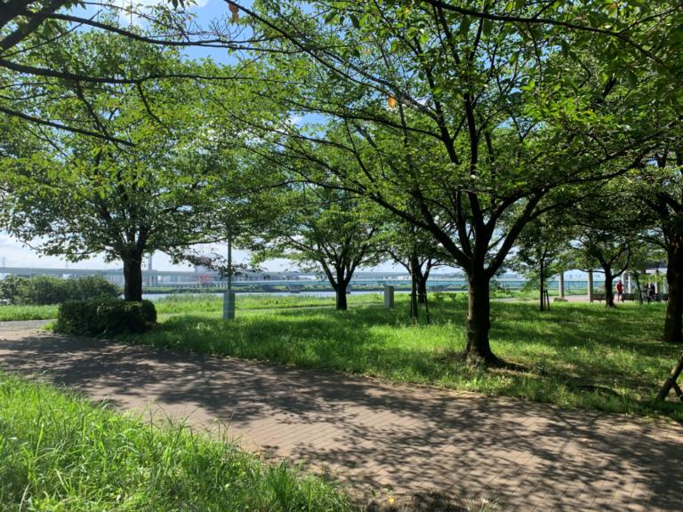 小松川千本桜4