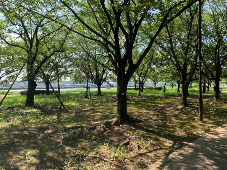 小松川千本桜5